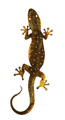 Large Spotted Gecko with tail curled