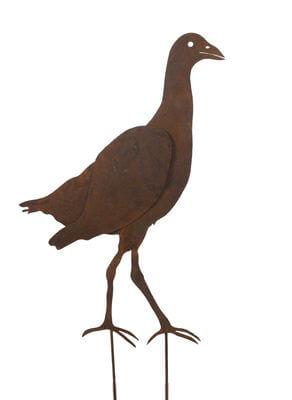 Swamp Hen 2